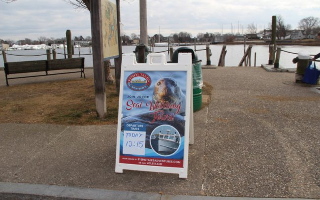 Fish and Tales Seal Watching Tours Rhode Island